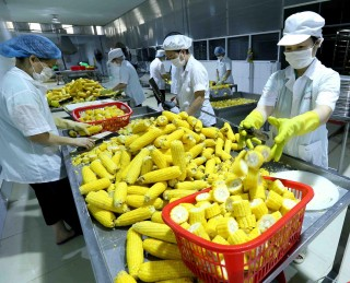 Nông nghiệp xuất siêu gần 7,3 tỷ USD